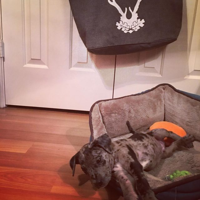 Buster the catahoula and my new tote from burlapranch