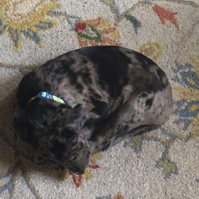 Puppy on a doormat nofilter hound catahoula puppy