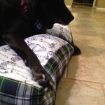 Chester lounging on the swanky home crafted doggie duvet